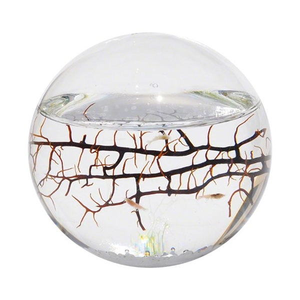 The Beauty Of Ecosphere